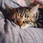 Kattenvoer voor jouw katten, wat is nu het beste?